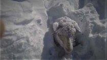 la nieve tapo a los animales en la linea sur