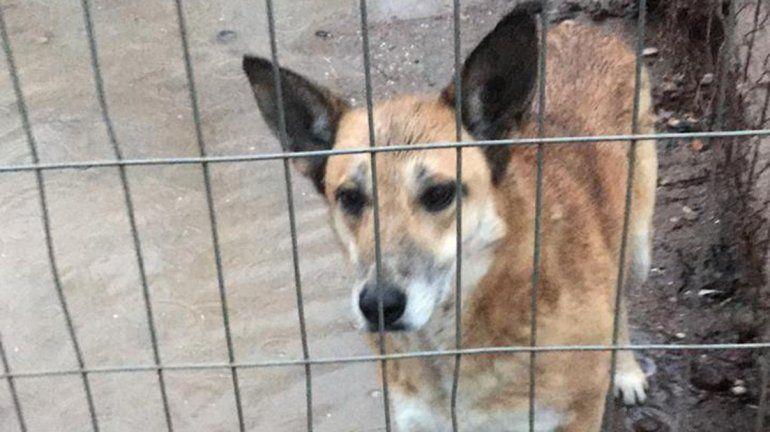 Arrancan obras de mejora en el refugio canino de la Isla Jordán