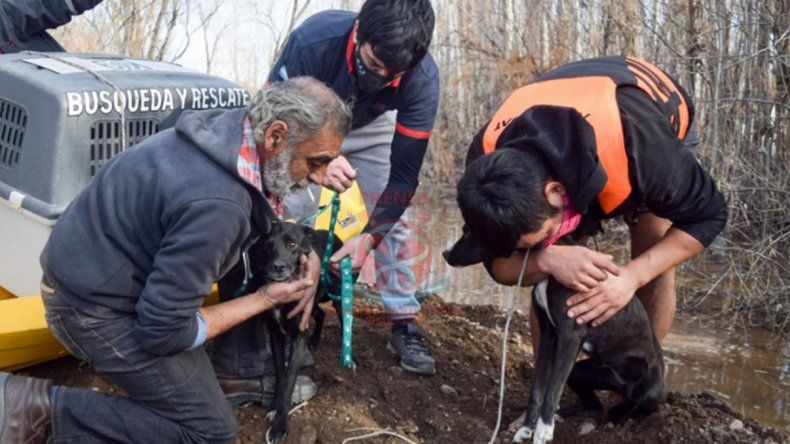 Increíble operativo de rescate de tres perros en General Roca