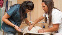 sumarian a veterinarios a las castraciones