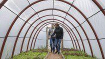 queremos que las familias produzcan sus propios alimentos