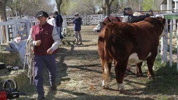 expo rural virtual alcanzo los $25.000.000 en ventas en viedma y patagones