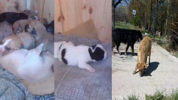 aberrante: prendieron fuego una cucha con 9 cachorros