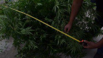 una presunta narco hara una probation para evitar el juicio