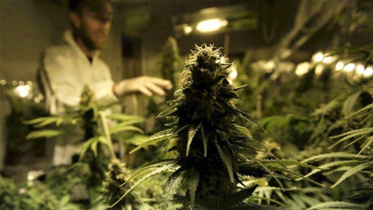 Otra ciudad a favor del autocultivo de cannabis medicinal