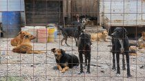 A partir de hoy, el Municipio dejará el manejo de la guardería canina en manos de una institución proteccionista.