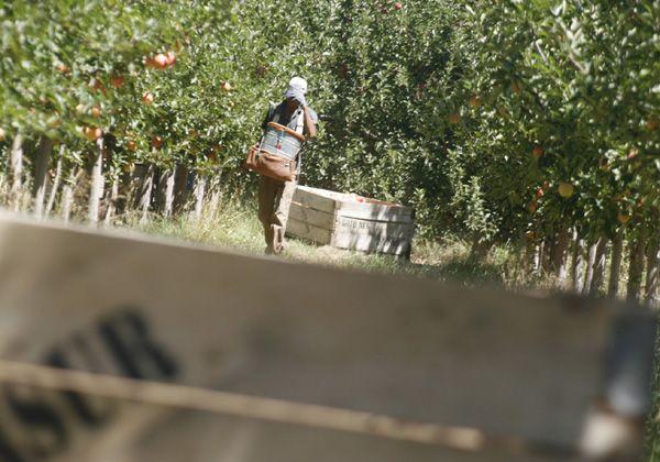 Se determinaron los costos de producción de la fruta