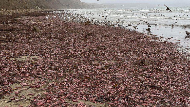 Sorpresa en California por una invasión del pez pene