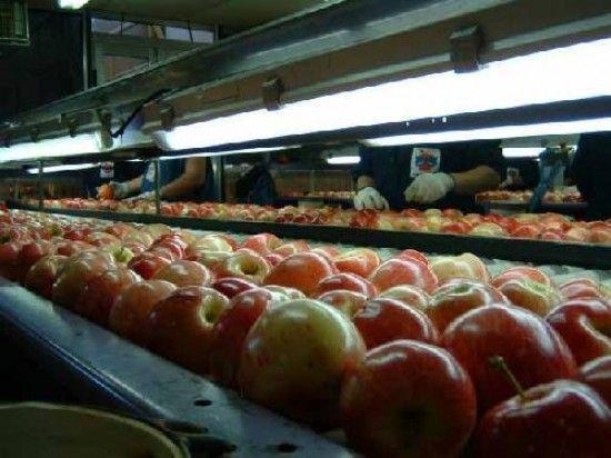 Más complicaciones para el ingreso de fruta a Brasil