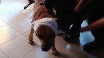Marrón siendo atendido después de ser atacado.