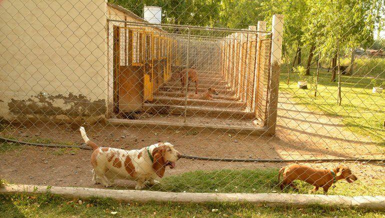 Guarderías, el lugar para las mascotas en las vacaciones