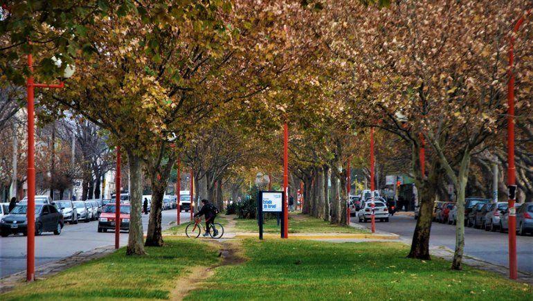 Planean intervenir los árboles de la Alem para construir la ciclovía