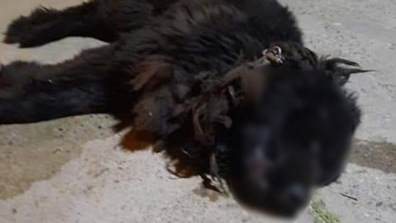 La fiscalía intervino en el caso del perro que mataron a patadas en Roca