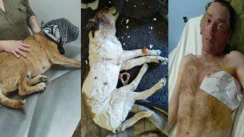 le perforaron un pulmon y a su perro lo mataron