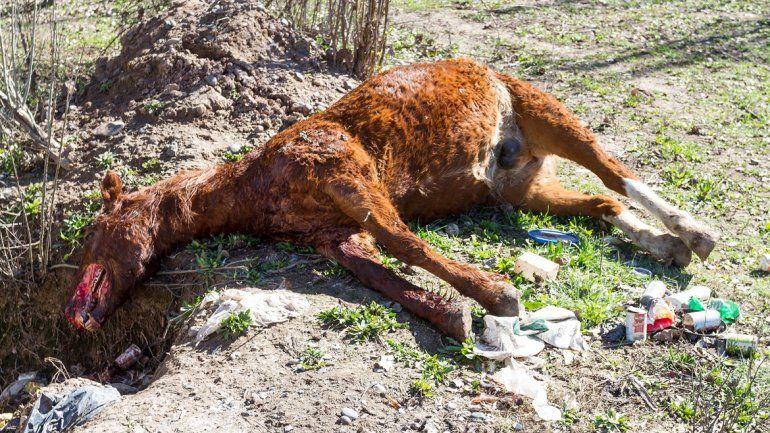 El caballo fue brutalmente asesinado en el predio de la fundación Transitar