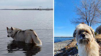 desesperada busqueda de dos perros perdidos en la villa mari menuco