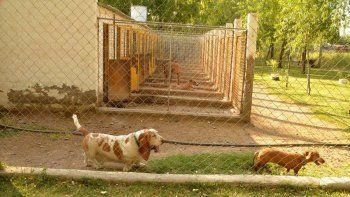 La población canina del refugio de la Isla Jordán se va reduciendo merced al empeño abnegado de las voluntarias de SOS Animal.