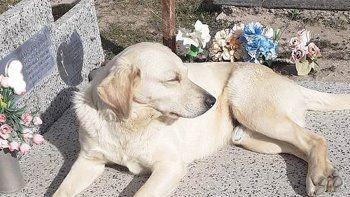 amor eterno: un perro vive junto a la tumba de su dueno