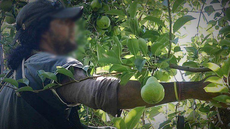 Afinan detalles del protocolo de cosecha para los golondrina