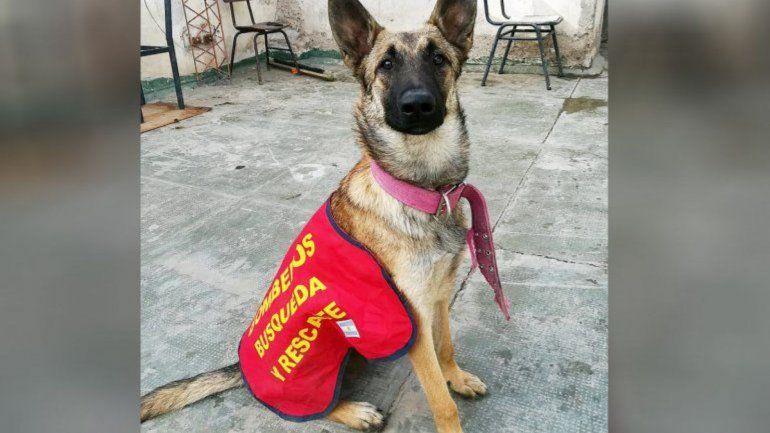 Continúa la búsqueda de Roma, la perra cipoleña de rastrillajes