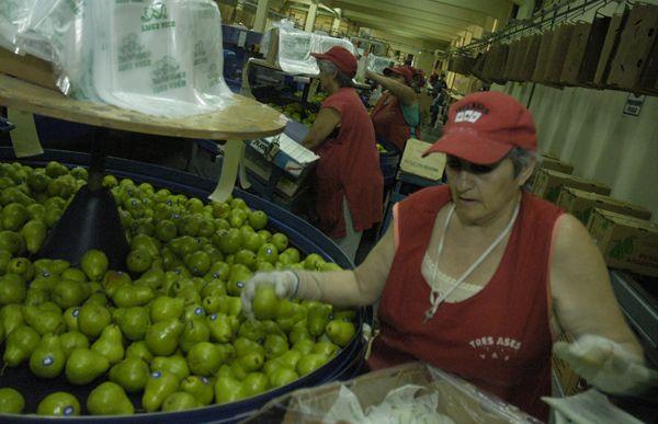 Caen las exportaciones de peras y manzanas