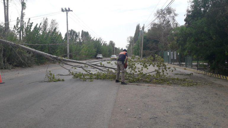 El viento tiró árboles sobre la calle y cables de electricidad