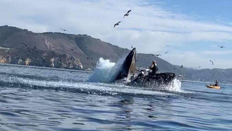 Video: una ballena se devoró a dos mujeres en un kayak