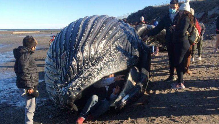 Indignante: se metieron en la boca de una ballena muerta para sacarse fotos