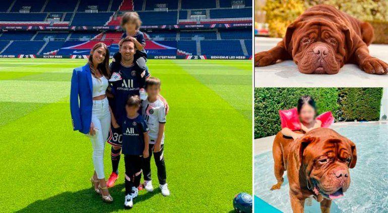 Messi, Antonela y sus hijos, en un tierno reencuentro con sus perros