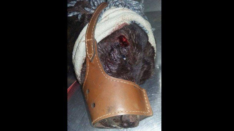 Torturaron y mataron a un perro a balazos en Bariloche