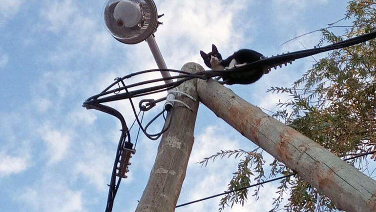 Bomberos héroes rescataron a una gato atrapado en las alturas