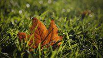 intensificaran las tareas de recoleccion de las hojas caidas