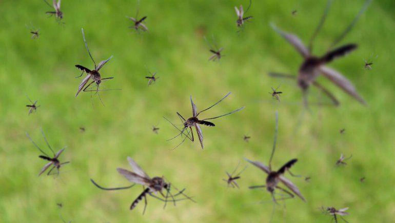 ¿Por qué hay una invasión de mosquitos en el Valle?