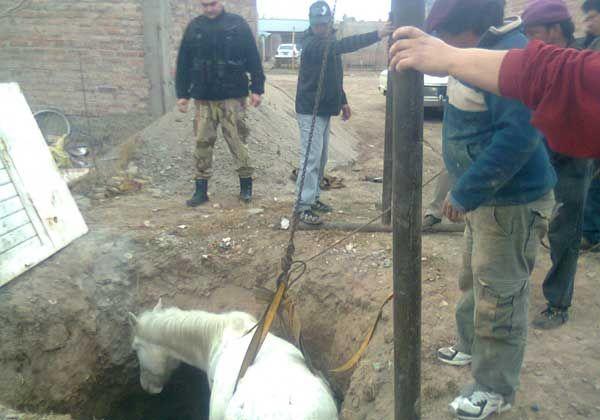 Rescatan caballo de un pozo de dos metros y medio