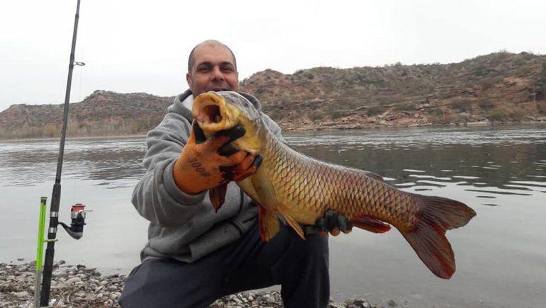 ¡Increíble!: cipoleño sacó una carpa de 7 kilos en la Isla Jordán