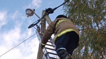 bomberos heroes rescataron a una gato atrapado en las alturas