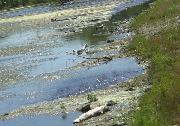 Niveles inocuos de metales pesados en el río Negro