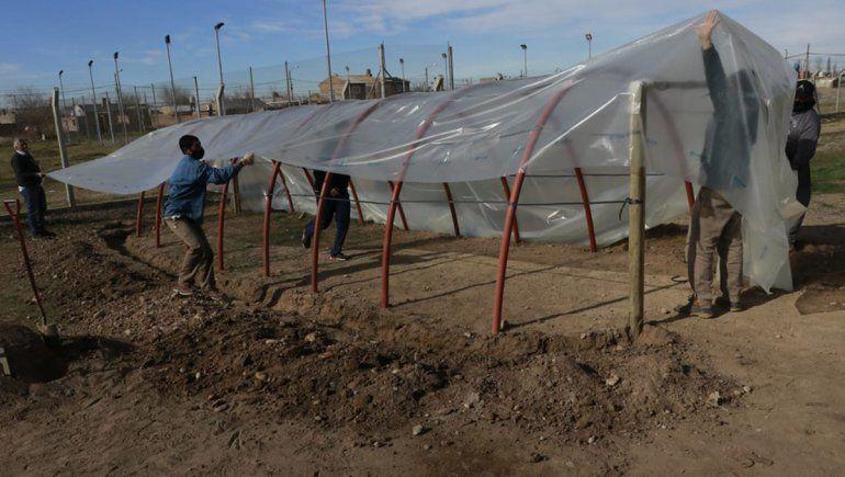 Familias cipoleñas se suman a la producción de alimentos saludables