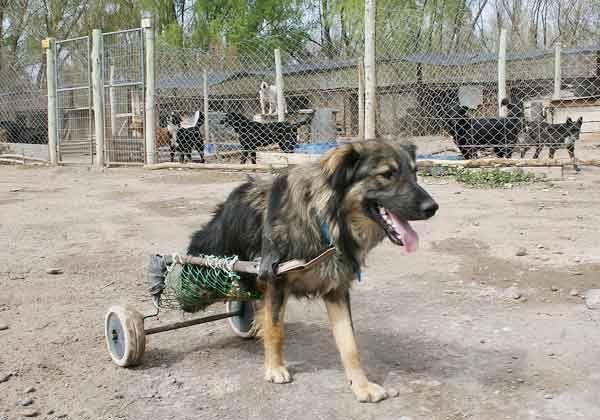 Denuncian robos en perrera municipal