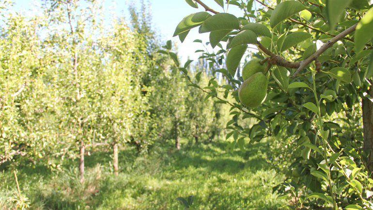 Ponen a disposición líneas de financiamiento para productores frutícolas