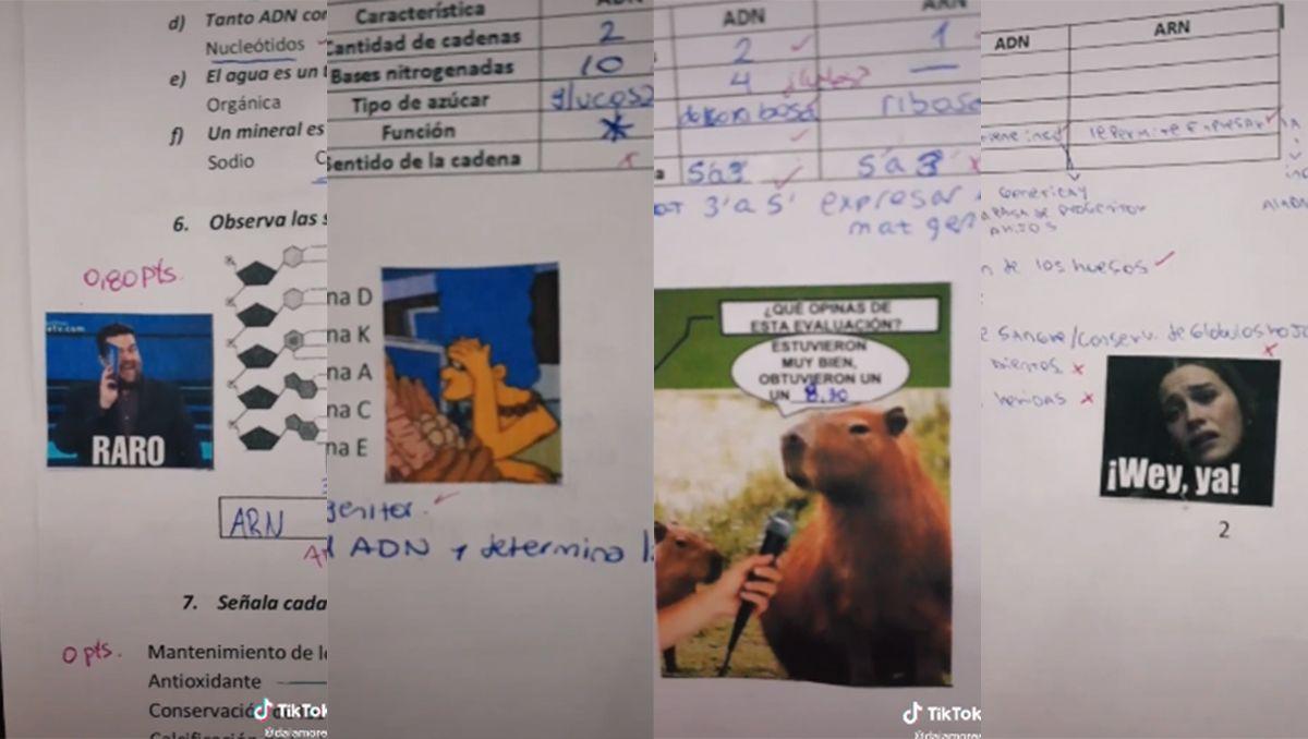 la docente que se volvio viral por corregir las evaluaciones con memes