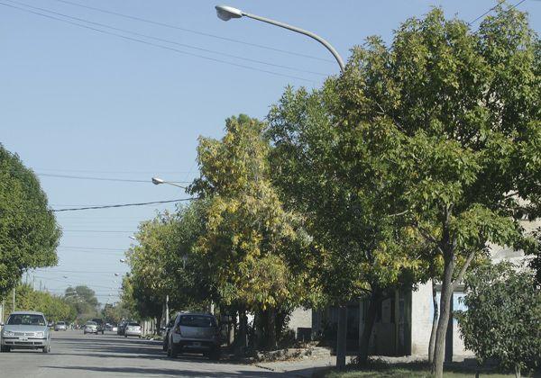 Seguidilla de robos en la calle Velasco en Allen