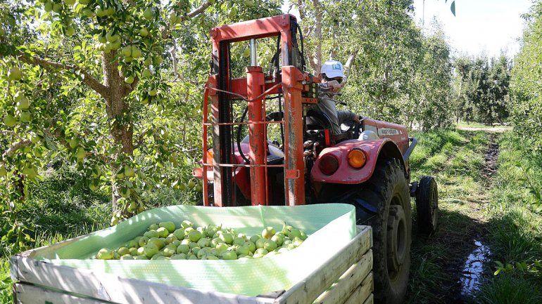 Cae la cosecha de peras y manzanas