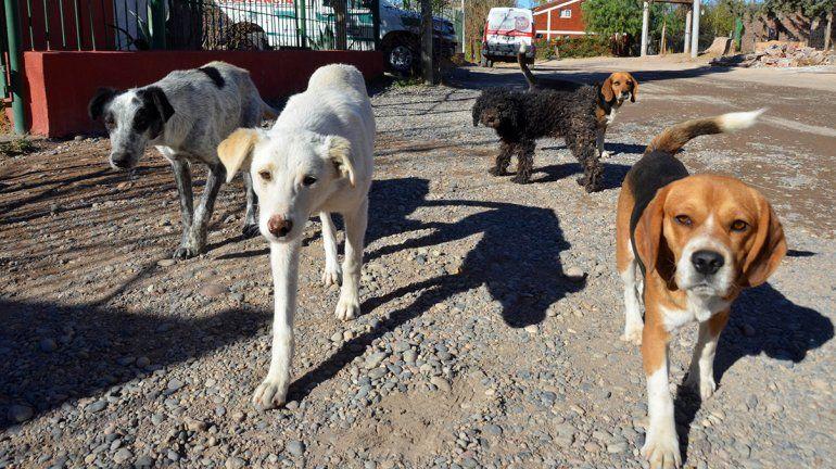 Presentan proyecto de Ley de Protección y Control de perros y gatos