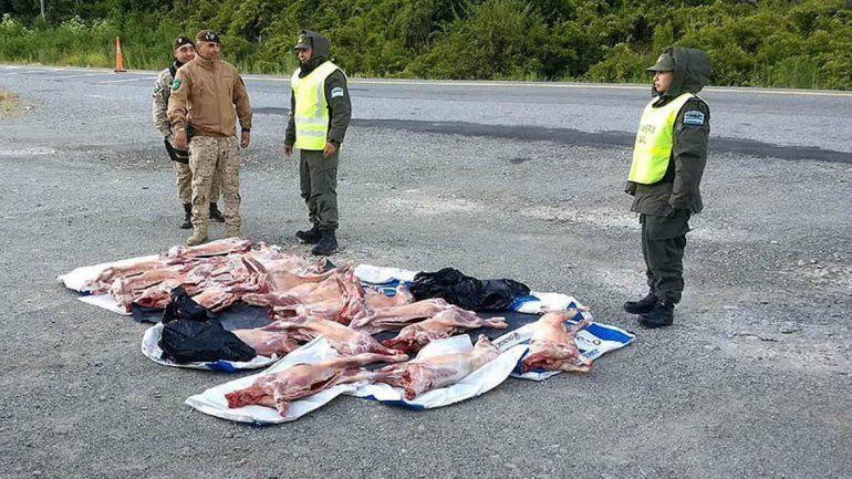Quería entrar corderos en forma ilegal y lo pescaron