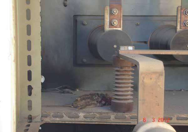 Un ratón provocó el corte de luz en Cipolletti