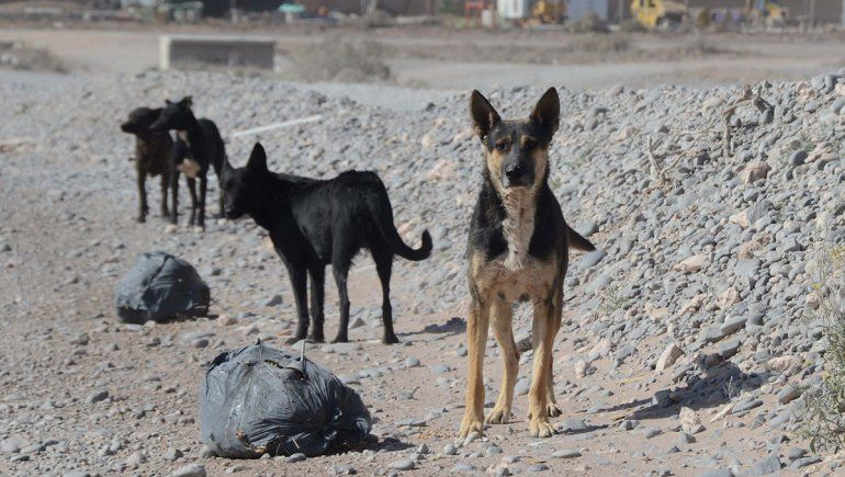 Proteccionistas exigen cuidado de perros callejeros