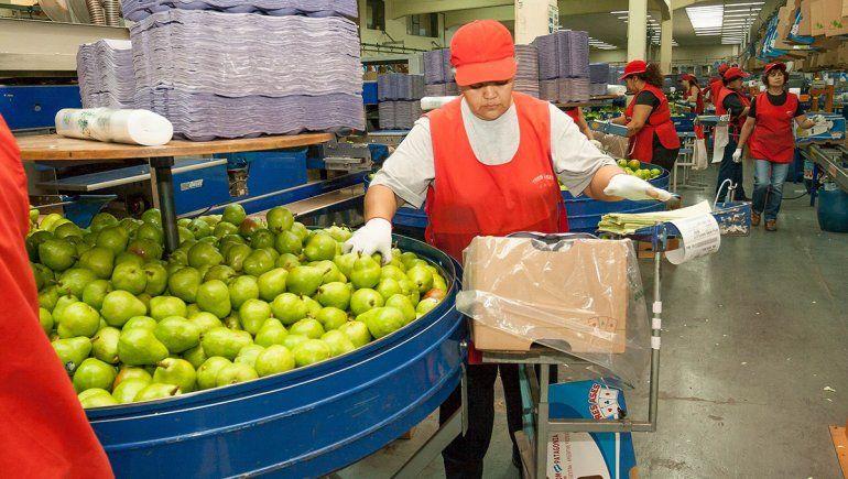 Fruta por fruta, el mapa de la producción y exportación del Alto Valle