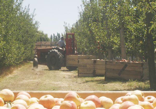 Vencimiento presentación de contratos frutícolas