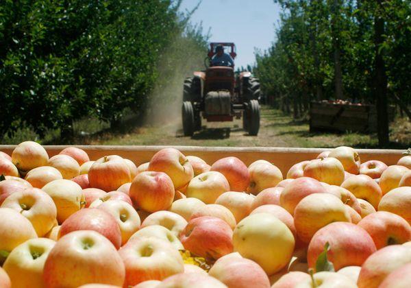 Acordaron los costos para la fruta en la región